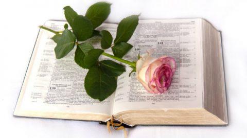 ανάγνωση της Βίβλου, Βίβλος, αυξήθηκε