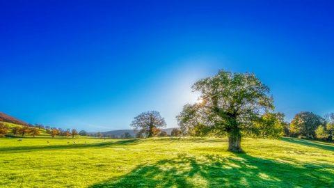 1η ιστορία. Ένας σπόρος, η γη, ένα δέντρο, το φως του ήλιου, τα ωδικά πτηνά και ο άνθρωπος