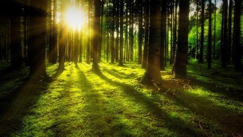Το βασικό περιβάλλον διαβίωσης που δημιουργεί ο Θεός για την ανθρωπότητα - Το φως