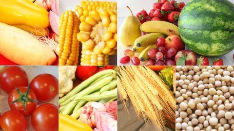 Όλα οι τροφές για χορτοφάγους που ετοιμάζει ο Θεός για την ανθρωπότητα