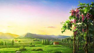 Πώς να γνωρίσετε τη διάθεση του Θεού και το αποτέλεσμα του έργου Του (Απόσπασμα ΣΤ')